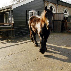 Vochtdoorlatende paarden staltegel in paddock