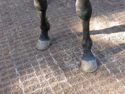 Kunststof rooster paarden paddock