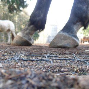 Grastegel voor paarden