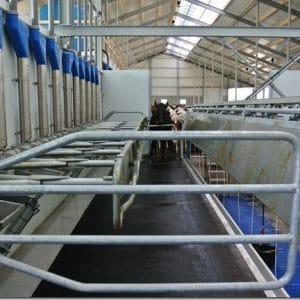 Melkstalrubber voor koeien