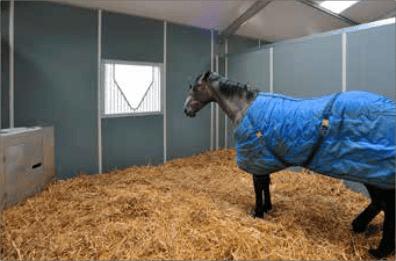 Paardensport en paardenfokkerij