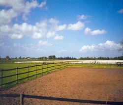afrasteringsband paarden